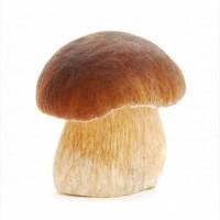 Продам белый гриб оптом
