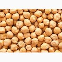 Семена Нута «Приво1» к посевной 2020