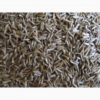 Семена фестулолиума ВИК 90 ЭС, РС1, РСт