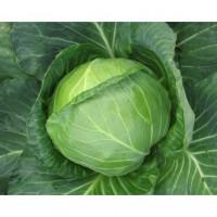 Семена б/к су/р. Джетодор ф1 (500 шт.)