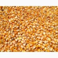 Кукуруза, 300 тонн