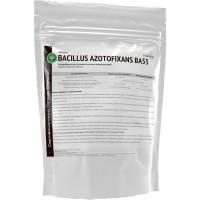 Bacillus azotofixans ВА55 Organic