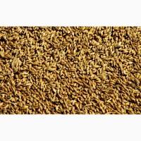 Пшеница урожай 2020г