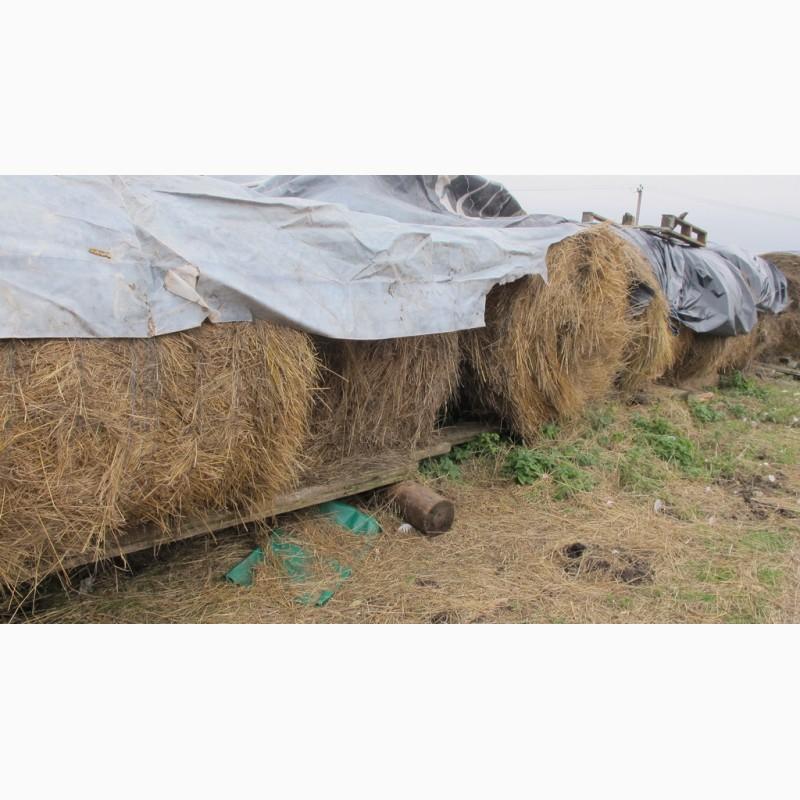 Фото 6. Конюшня ферма в аренду