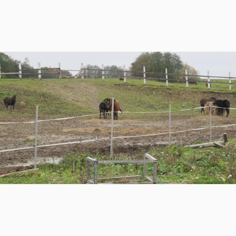 Фото 8. Конюшня ферма в аренду