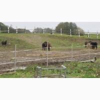 Конюшня ферма в аренду