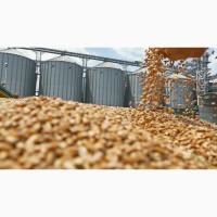 Экспорт пшеницы 3, 4, 5 класс в Иран, Сирию, Ливию, Турцию и другие страны FOB, CIF