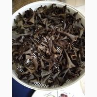 Продам сушёные чёрные лисички
