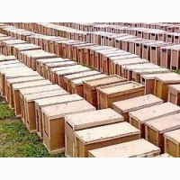 Помощь с покупкой пчело пакетов породи карпатка в Украине 2020г