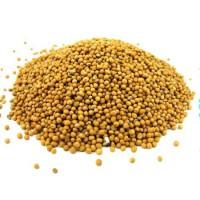 Семена горчицы сорт «Люкс» РС1