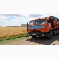 Свободные зерновозы на уборку