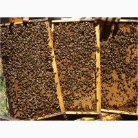 Пчелопакеты оптом и в розницу