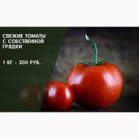 Помидоры/ томаты из собственного тепличного хозяйства