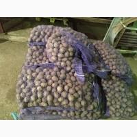 Картофель семенной оптом от фермера