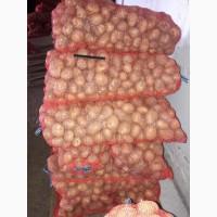 Картофель Нандина калибр 5+ 6+ оптом напрямую от производителя