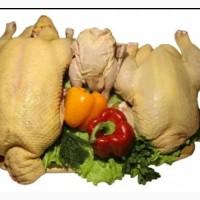 Мясо сельскохозяйственной птицы