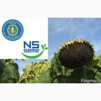 Семена гибрида подсолнечника НСХ 6008 (EXPRESS) Сербской селекции