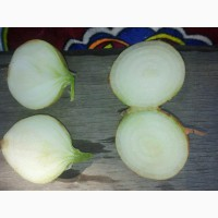 Лук репчатый оптом напрямую от поставщика из Узбекистана