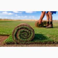 Рулонный газон Спортивный от 130 руб/рул