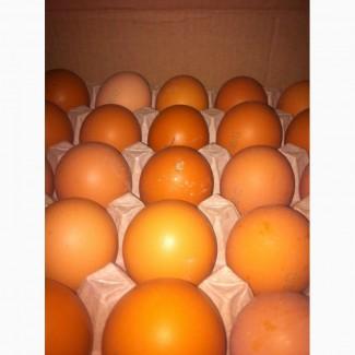 Закупаем оптом яйца куриные