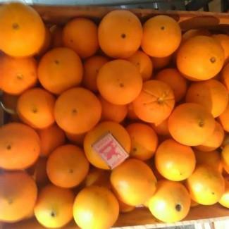 Апельсины Абхазские оптом