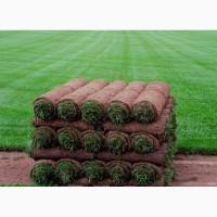 Рулонный газон Премиум от 97 руб/рулон