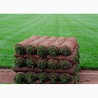 Предлагаем рулонный газон Премиум от 97 руб/рулон