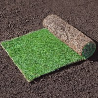 Рулонный газон Теневыносливый от 97 руб/рулон