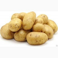 Картофель семенной IIрепр