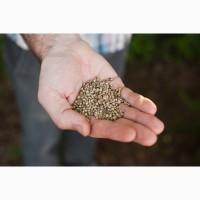 Зерно конопли, пищевой для масла, жмыха, семечка