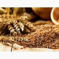 Пшеница продовольственная 4 класс (кл.20-22%) на экспорт