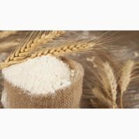 Крахмал пшеничный нативный ГОСТ
