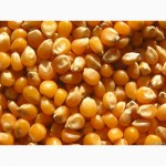 Фуражная кукуруза мелкий опт