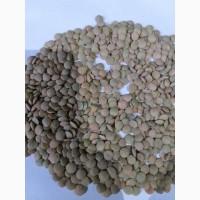 Чечевица (Lentils green disc)