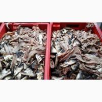 Переработка рыбных отходов, рыбы