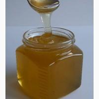 Мед свежий (бесплатные пробники)