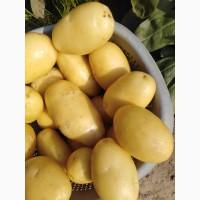 Картофель молодой отборный крупный