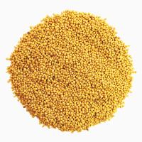 Маслосемена горчицы желтой