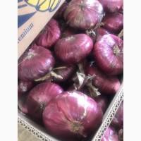 Продам лук ялтинский