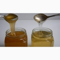Мед алтайский (свежий урожай) широкий ассортимент