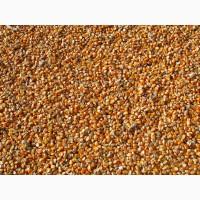 Продаю фуражную кукурузу оптом от производителя. 13800 руб/тонна