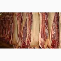 Свинина оптом от производителя 130 р./кг