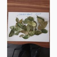 Лавровый лист сухой, целый, Грузия, от импортера