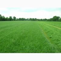 Продаем кормовые травосмеси для закладки сенокосов и долголетних культурных пастбищ