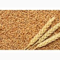 Пшеница 2 класс. CIF, FOB, EXW