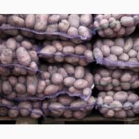Продаем продовольственный картофель оптом сорта