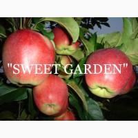 Яблоки от производителя из Польши - большой опт