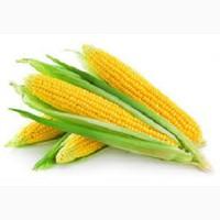 Элитные семена кукурузы Зерноградский 282 МВ, 354 МВ