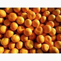 Мандарины, лимоны, яблоки, урожай 2020 года