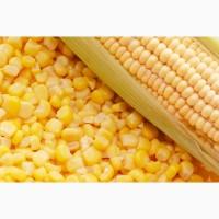 Сорта и гибриды кукурузы